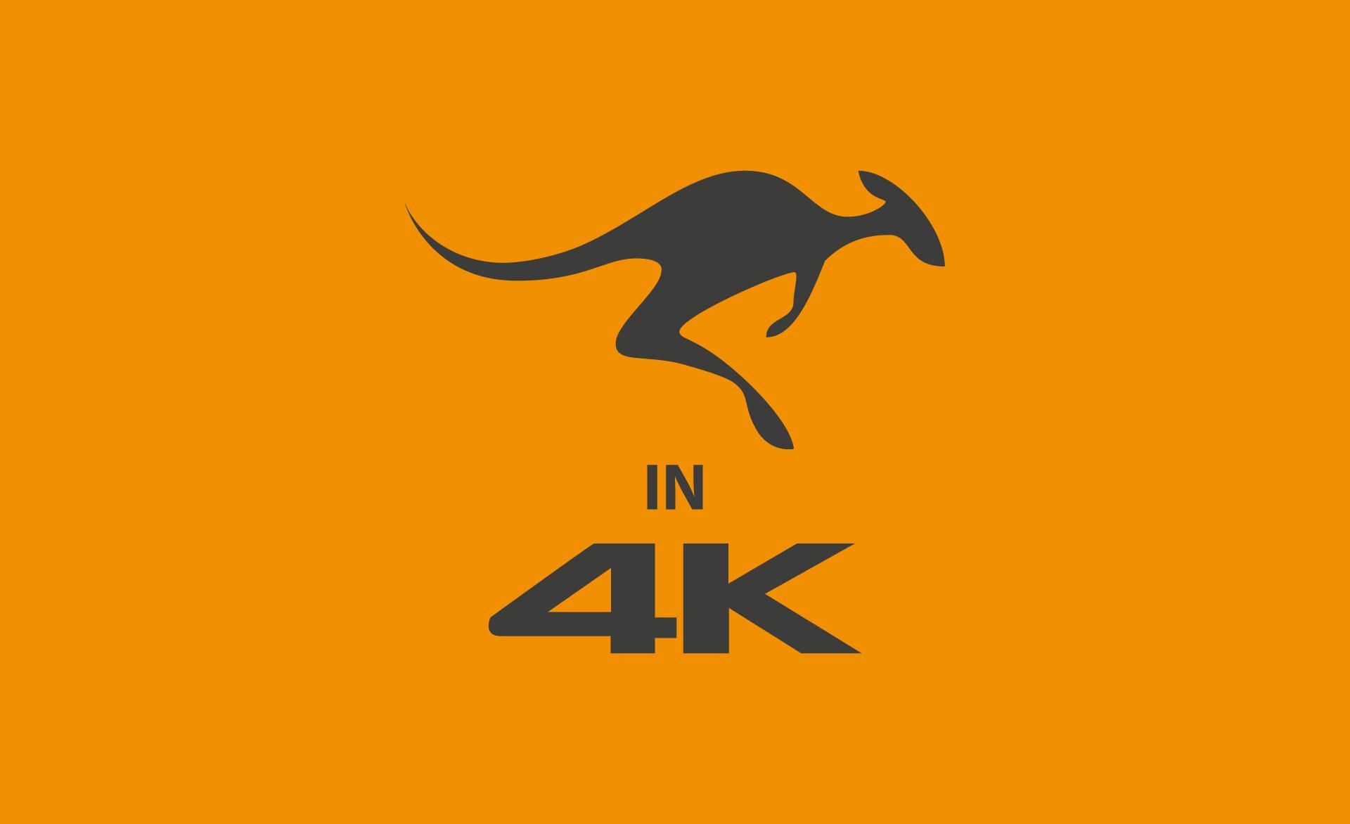 KANGAROO Pictures in 4K!